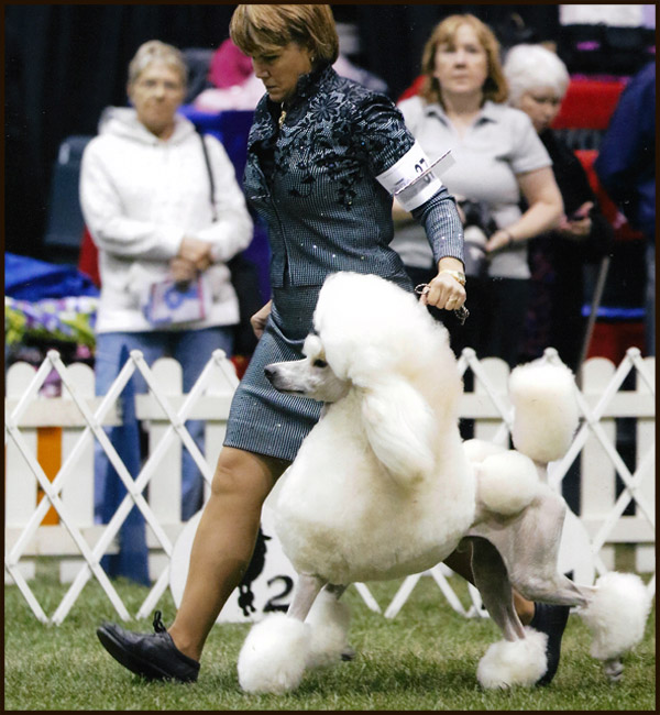 Poodle kennel club of america